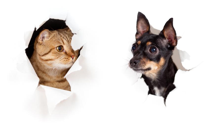 cote&doge